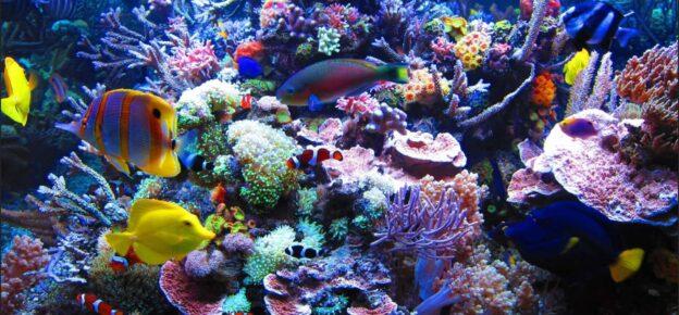 Professional reef tank