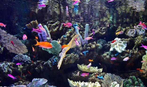 Reef tank temperature